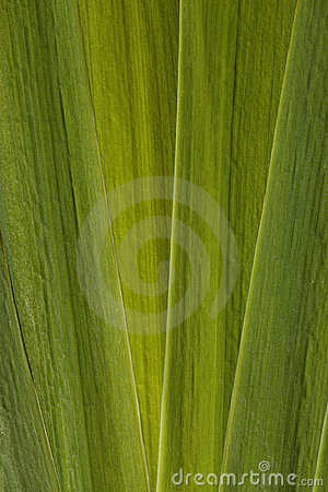 Leaf iris
