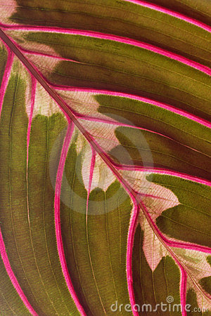 Free Leaf Macro Royalty Free Stock Photography - 4610297