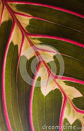 Free Leaf Macro Stock Photo - 4610310