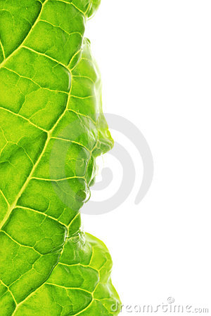 Leaf macro border