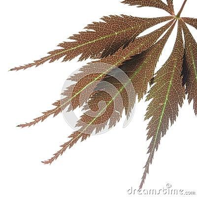 Leaf macros