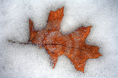 Leaf Melting Into Winter Icy Cold Snow