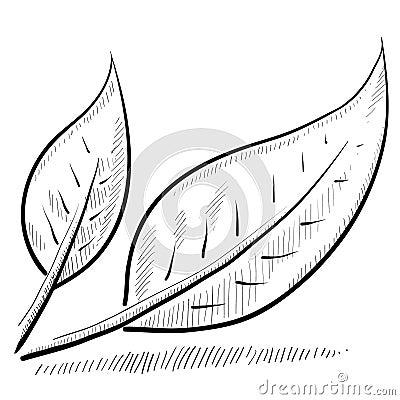 Leaf or nature sketch