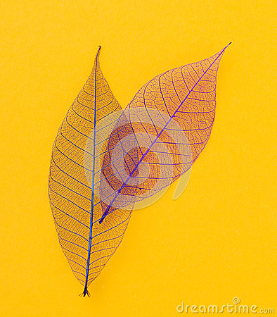 Free Leaf On The Table Royalty Free Stock Image - 54311006