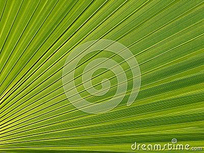 Leaf of a palm tree