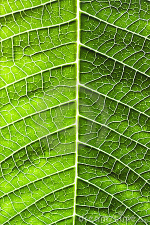 Leaf of a plant