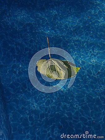 Leaf in a Pool