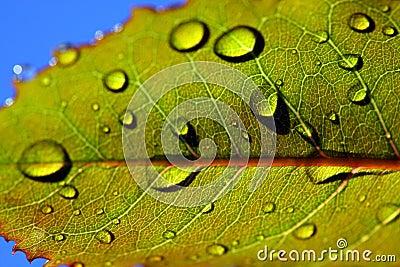 Leaf with rain droplets