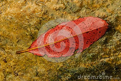 A leaf is red