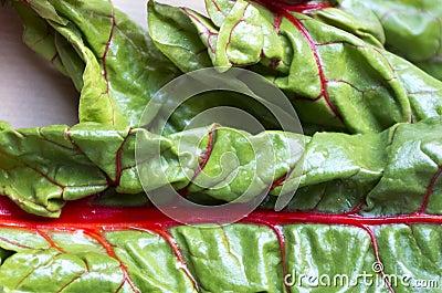 Leaf of Red -stemmed chard