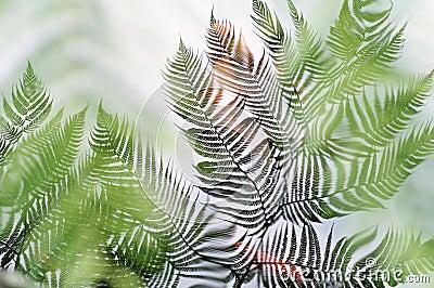 Leaf reflected