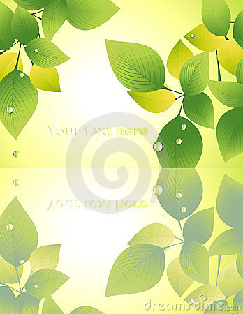 Leaf reflection on yellow background