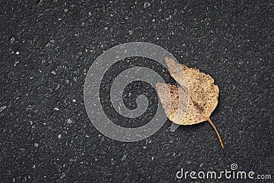 Leaf on road