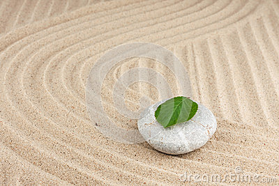 Leaf on a rock in the sand