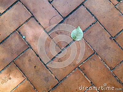 Leaf on a Sidewalk