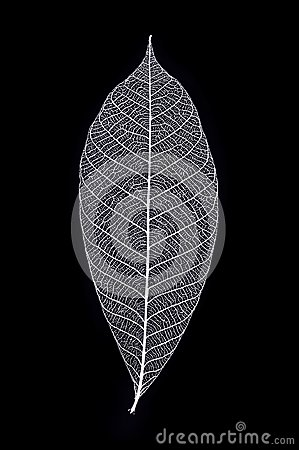 Free Leaf Skeleton In Macro View Royalty Free Stock Images - 109585349