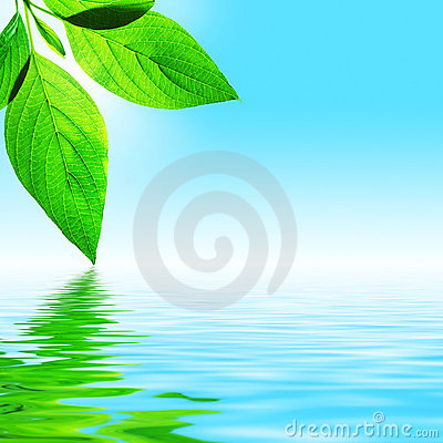 Free Leaf, Sky And Water Royalty Free Stock Image - 2837766
