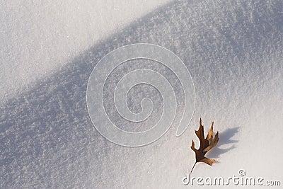 Leaf on Snow