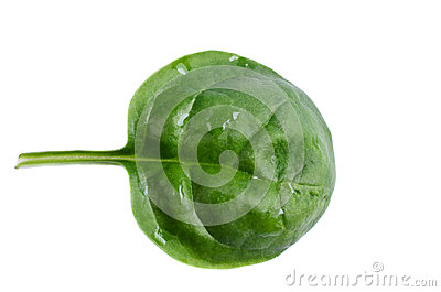 Leaf spinach isolated