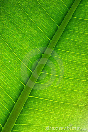 Free Leaf Structure Royalty Free Stock Photography - 10706197