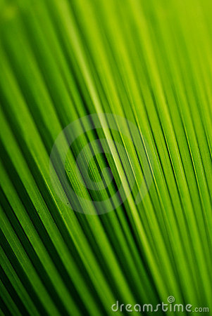 Free Leaf Structure Royalty Free Stock Photos - 1928728