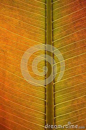 Leaf surface.