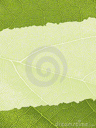 Free Leaf Texture Background Stock Photography - 11837762