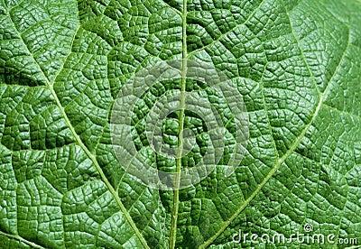 Leaf texture background