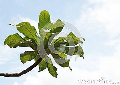 leaf tree in sky