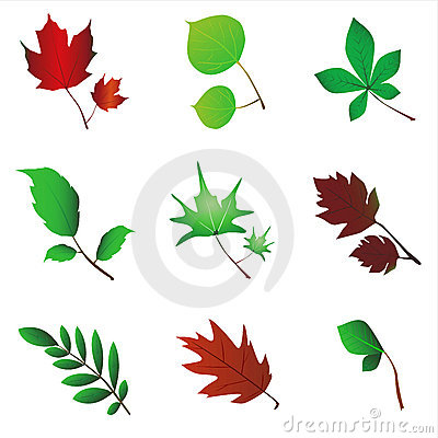 Free Leaf Vector Royalty Free Stock Image - 3682196