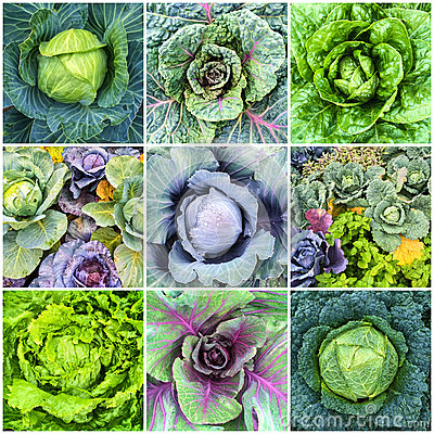 Free Leaf Vegetables, Cabbage And Lettuce Collage Royalty Free Stock Photo - 60674855