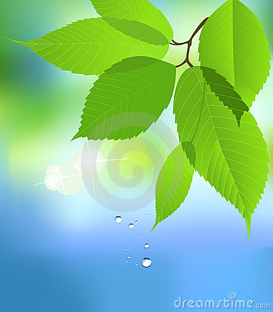 Leaf with Water Drop.