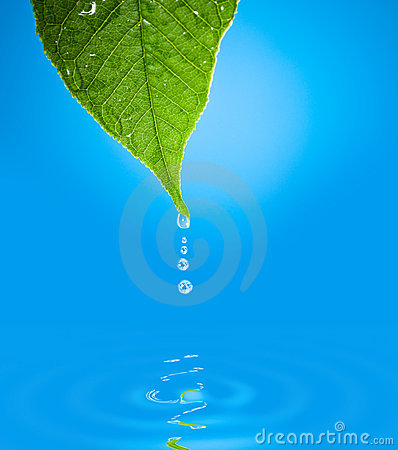 Leaf with water droplet over water reflection