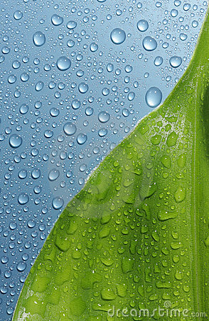 Free Leaf & Water Drops Royalty Free Stock Images - 6886189