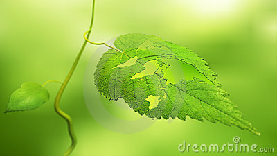 Leaf with a world map