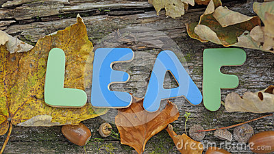 Leaf written