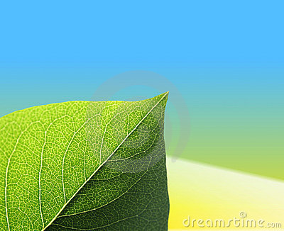 Leaf on yellow blue background