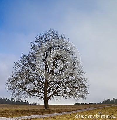 Free Leafless Tree Stock Photography - 7971122