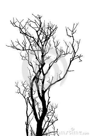 Free Leafless Tree Branches Abstract Background Stock Photos - 32252003