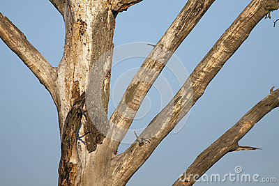 Leafless tree detail