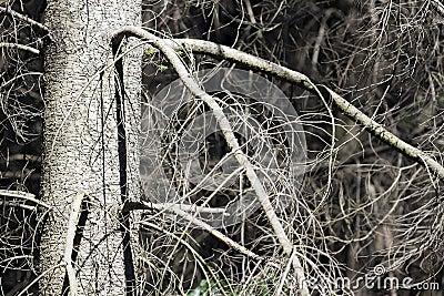 Leafless tree detail