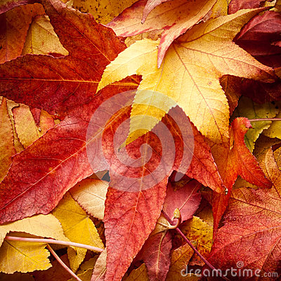 Free Leafs In Autumn Stock Photo - 26648060