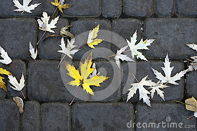 Leafs on the Paving slabs