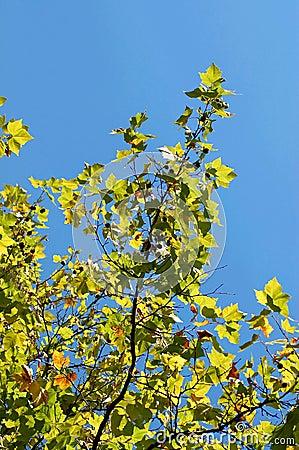 Leafs on tree