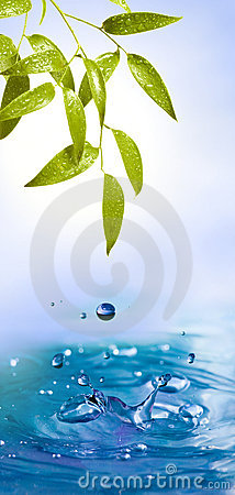 Free Leafs With Water Drops And Splash Stock Photography - 8270412