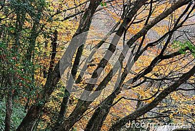 Leafy autumn trees