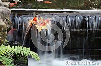 Leafy Brook