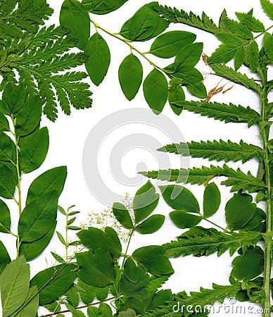 Leafy green border
