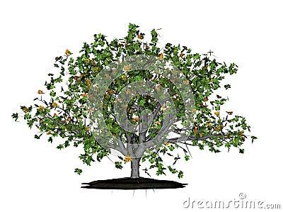 Leafy green oak tree