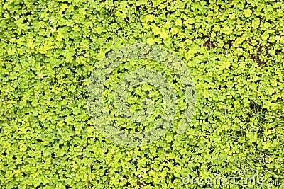 Leafy green plants background